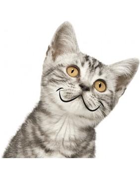 dla kotów