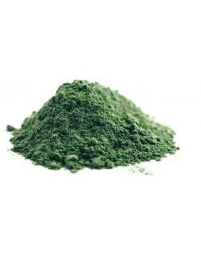 Glony, algi, wodorosty