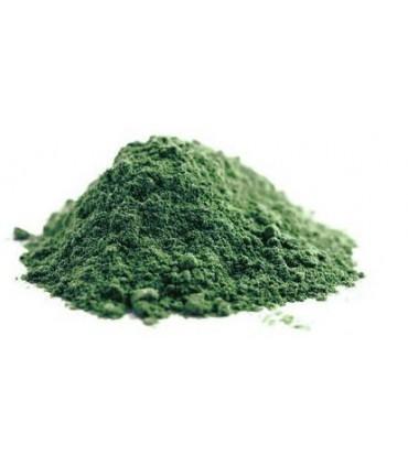 Glony, algi, wodorosty (nie w tabletkach)