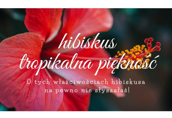 Poznaj efekty stosowania hibiskusa na skórę i do picia!